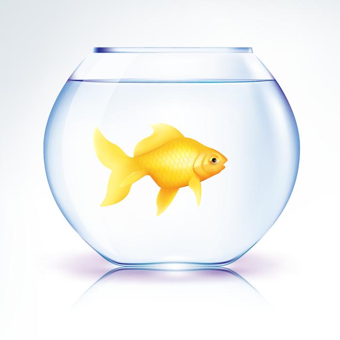 Goldfish-in-bowl2.png