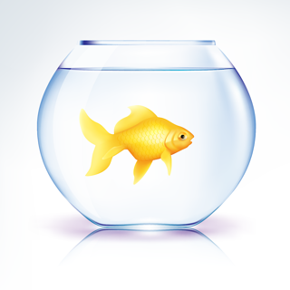 Goldfish-in-bowl2.png