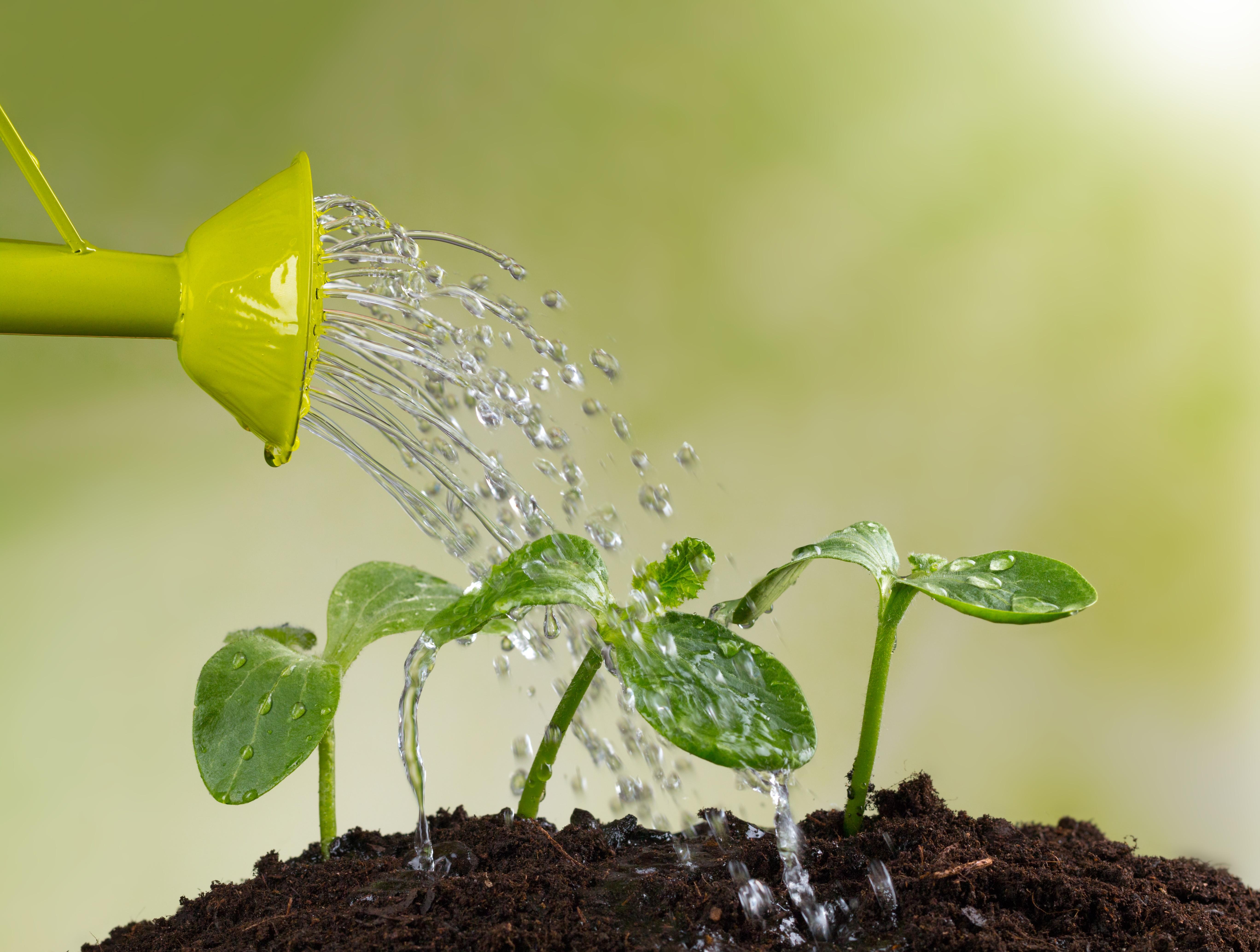 change management development growth