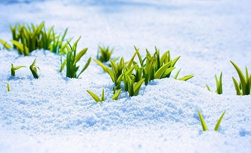 snow-vegetables.jpg
